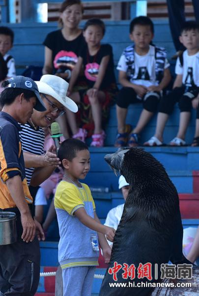 小游客与海狮互动