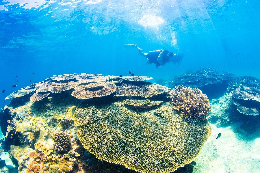 中国最大珊瑚馆于海南陵水分界洲岛开馆